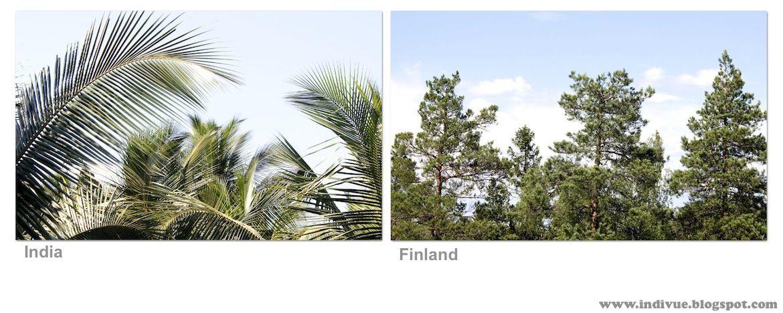 Puunlatvat Intiassa ja Suomessa