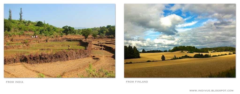 Suomalainen ja intialainen pelto