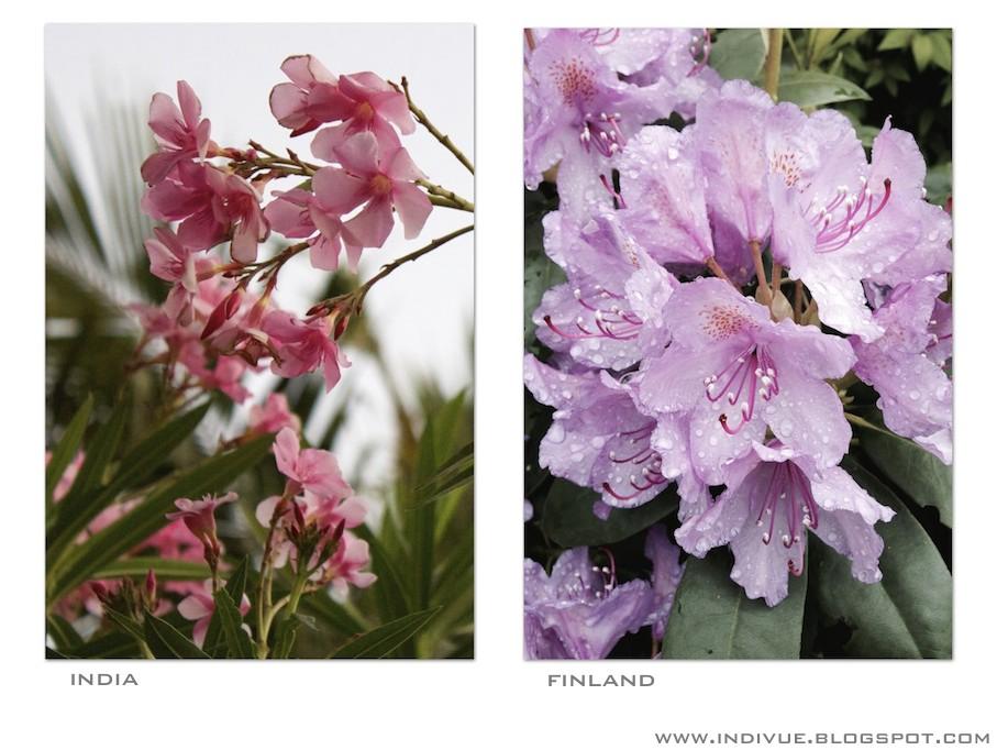 Vaaleanpunaisia kukintoja