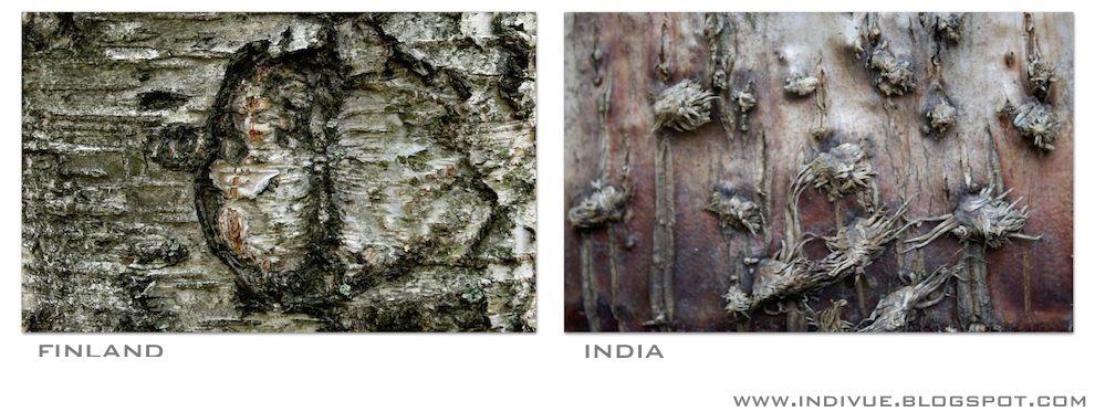 Suomalaisen ja intialaisen puun kuori