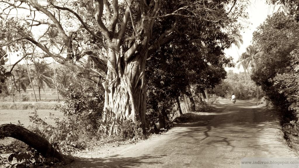 Tie Goassa palmujen katveessa