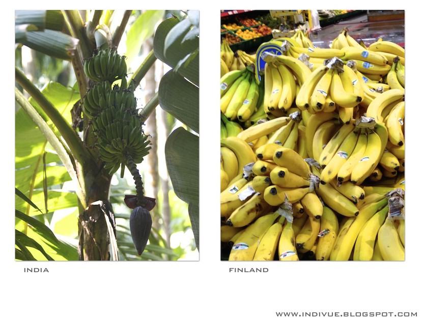 Banaani Suomessa ja Intiassa
