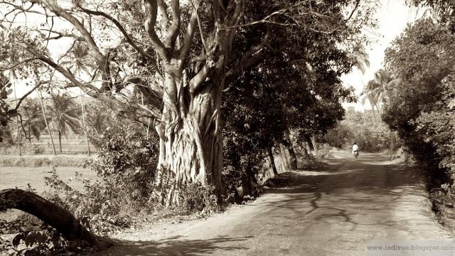 Tien päällä Goassa