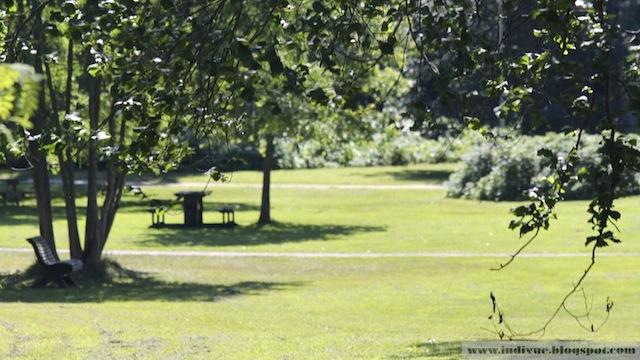 Suomalainen puisto