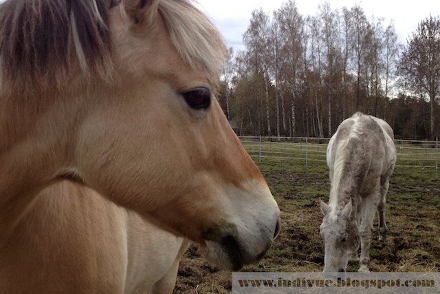 Suomalainen hevonen