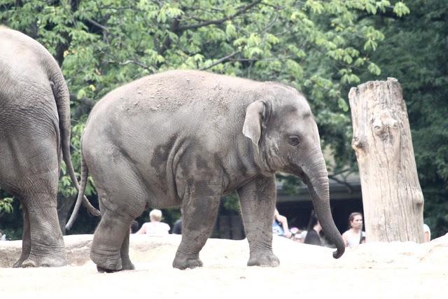 norsunpoikanen berliinin elaintarhassa