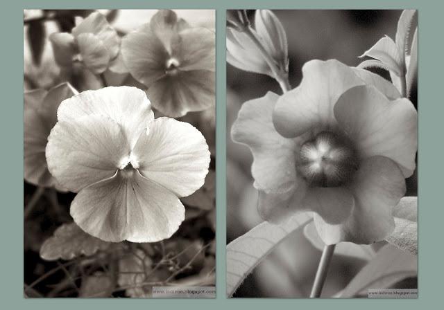 Suomalainen ja intialainen kukka