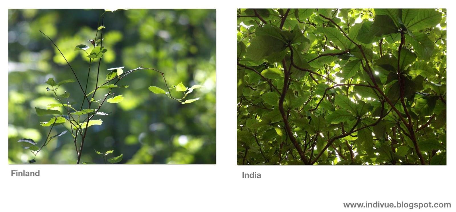 Lehtivihreitä Suomessa ja Intiassa