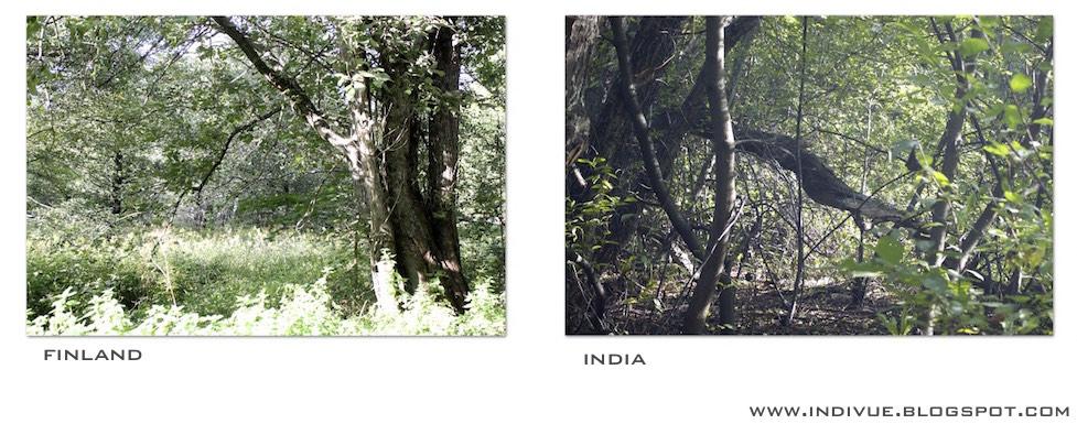 Metsää Suomessa ja Intiassa