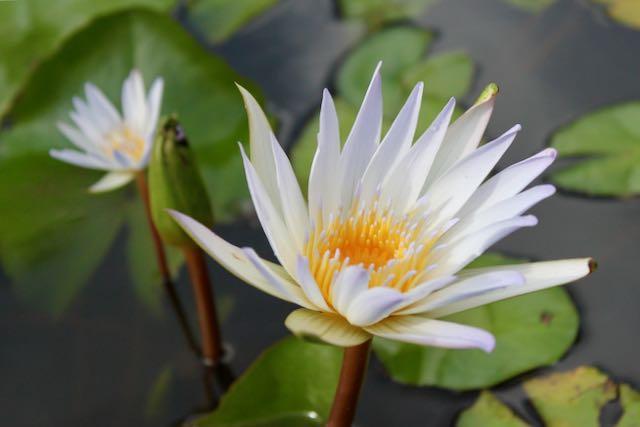 Valokuvia Pondicherrystä, Intiasta