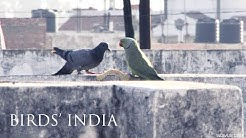 Pulu ja papukaija Intiassa