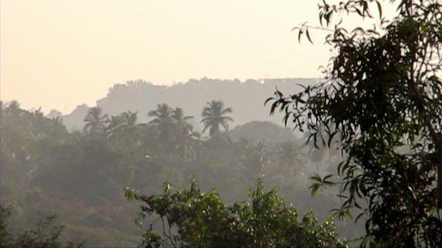 Goan palmuja ja kukkuloita