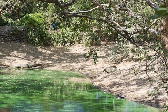 Krokotiilipuisto Tamil Nadussa