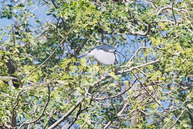 Lintu puun oksalla Itä-Intiassa