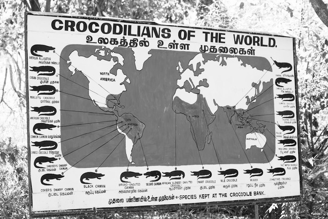 Maailman krokotiilit -kartta